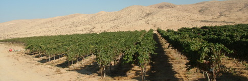 Vineyard on the Wine Way - Negev Desert