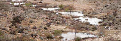 Nabatean agriculture - - after rain
